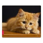 Коврик для мыши Speedlink SILK, Baby Cat